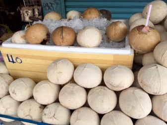 Coconuts, iced down for your pleasure